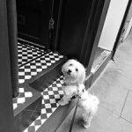 Max der Bürohund